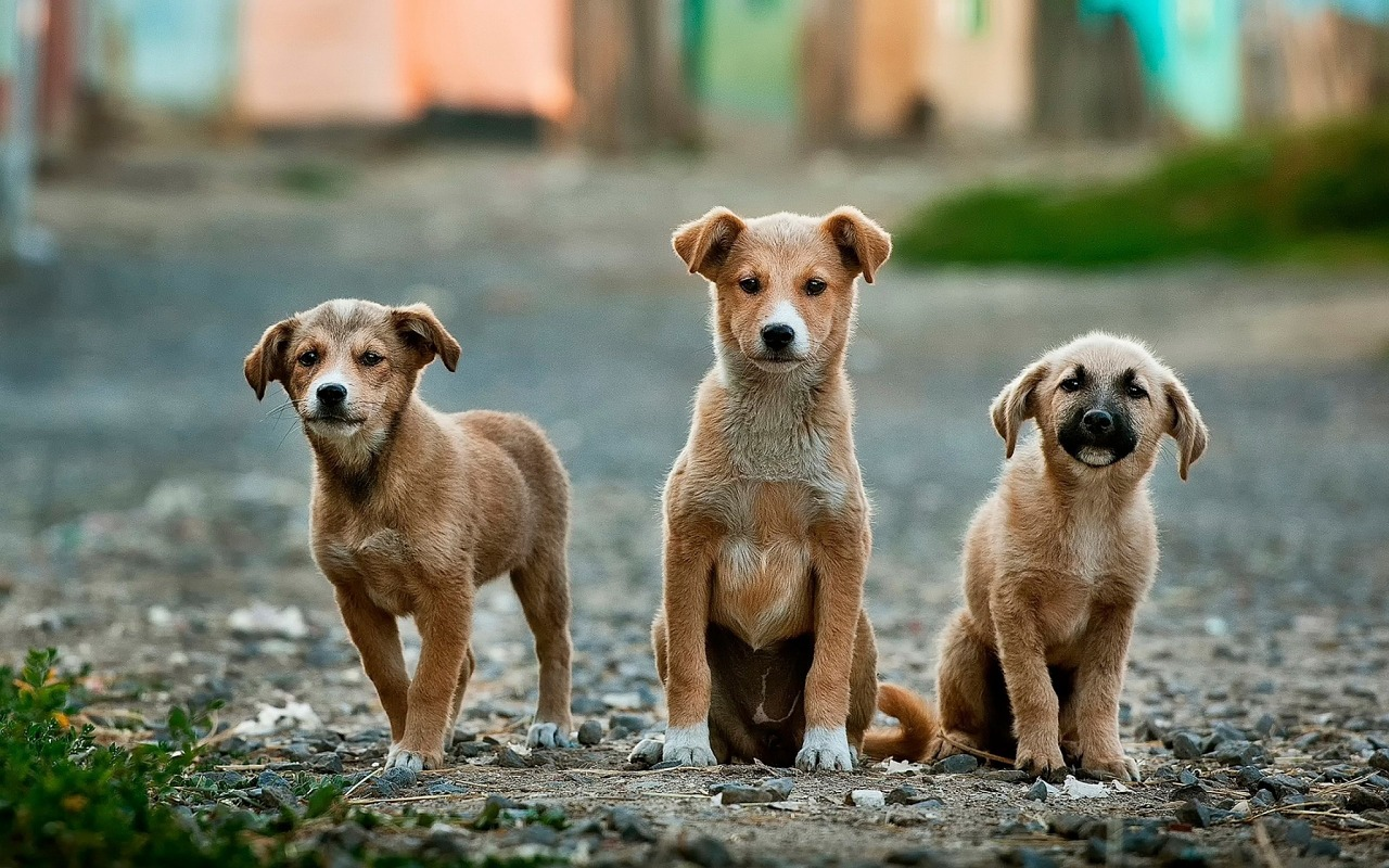 Hundetraining mit jungen Welpen