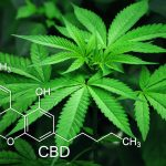 CBD Dosis und Anwendung